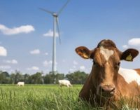 FrieslandCampina to Invest €24 Million Annually in Sustainable Farming