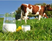 Dairy industry unites to launch £1m consumer campaign