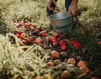 Ramborn Cider Achieves European First