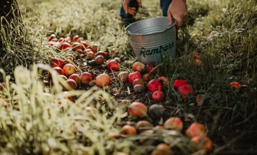 Ramborn Cider Achieves European First