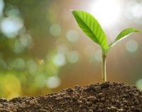 Six Key Opportunities in Controlled Environment Agriculture